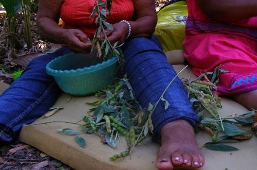 Red de Mujeres Rurales de Costa Rica: semeando autonomia e luta